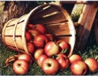 Притча о яблоках