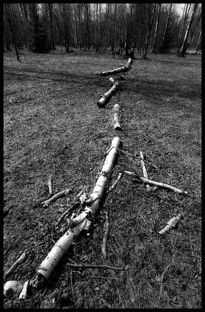 Падшее дерево (Ч/Б)