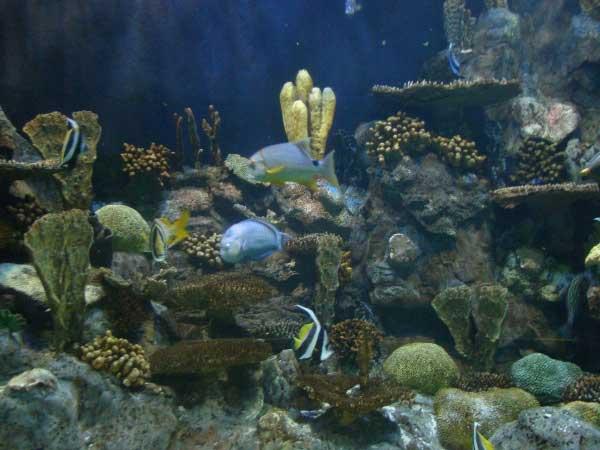 Таинственный подводный мир Канарских островов.