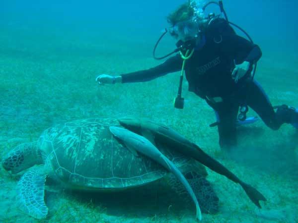 Черепаха - радость дайвера