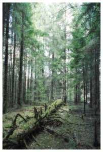 Forest-Fallen-Tree-1