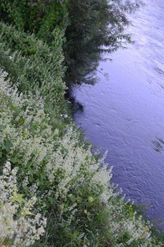 Прохладная река - цветущие берега.