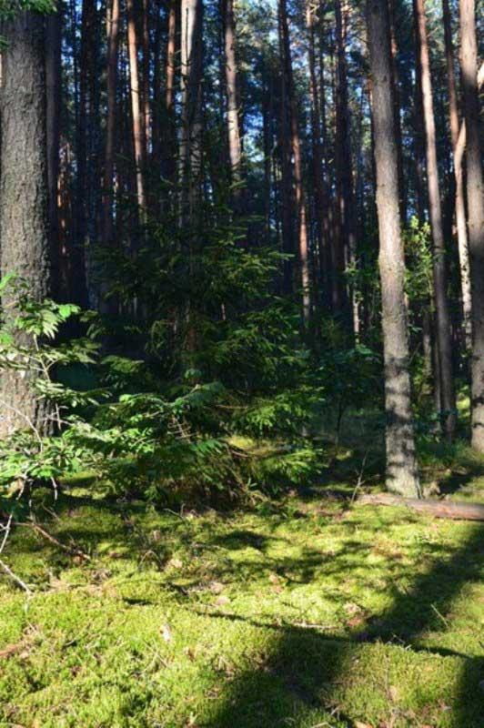 Из леса веет приятной прохладой.