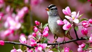 a-spring_bird